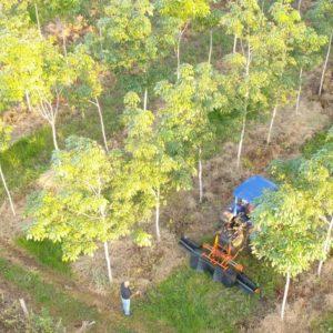 Arbeiter und Plantagenwagen von Timberfarm
