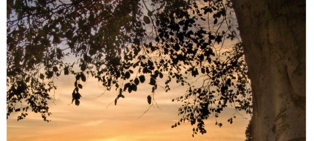 Coverbild das geheime leben der bäume