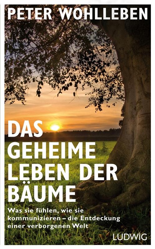 Buchdeckel Peter Wohlleben: Das geheime Leben der Bäume
