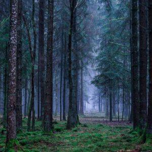 Wald stille